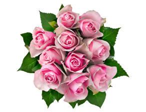 Фото Букеты Розы Белый фон Розовый Цветы