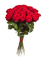Фотография Букет Розы Белый фон Красный Цветы