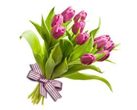 Фотографии Букеты Тюльпаны Белый фон Бантик Розовый Цветы
