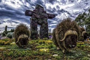 Фотографии Канада Парки Американский бизон Дизайн HDRI Ottawa Ontario Природа