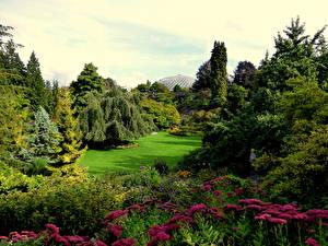 Фотографии Канада Парки Газон Деревья Кусты Queen Elizabeth Park