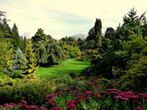 Фотографии Канада Парки Газоне Дерево Кусты Queen Elizabeth Park Природа