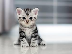 Фотография Кошка Котенка Смотрит Сидящие животное