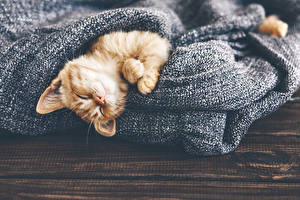 Картинки Кошки Котята Спящий