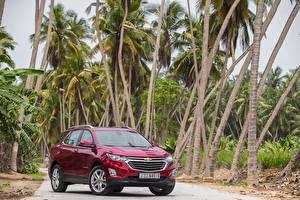 Картинки Chevrolet Бордовый Металлик 2017 Equinox Premier Авто
