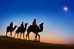 Фотографии Пустыни Верблюды Вечер Животные