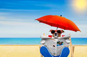 Картинка Собаки Пляж Джек-рассел-терьер Очки Зонт Газета