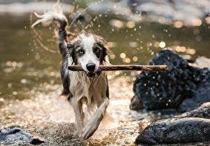 Картинки Собаки Мокрые Взгляд Животные