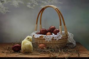 Обои Пасха Птенец курицы Корзина Яйцами Соломе Пища