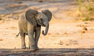 Фотографии Слоны Детеныши Животные