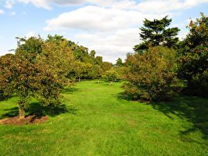Обои Англия Парки Лондон Деревья Трава Kew Gardens Природа