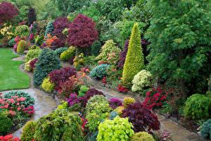 Картинка Англия Парки Дизайн Кусты Ель Walsall Garden Природа