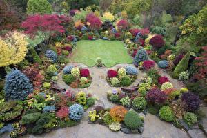 Фотография Англия Парки Газон Кусты Walsall Garden Природа
