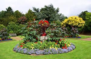 Фотография Англия Парки Газон Wentworth Castle Gardens Природа