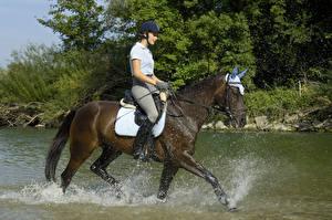 Фото Конный спорт Лошади Вода Брызги Спорт Девушки
