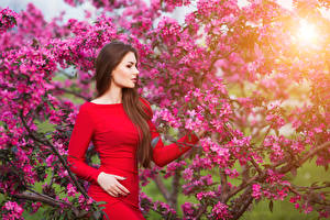 Обои Цветущие деревья Шатенка Платье Девушки