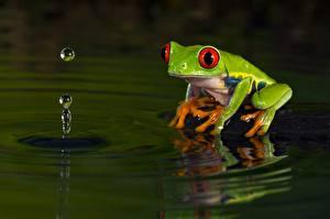 Фотографии Лягушки Вода
