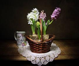 Фото Гиацинты Корзинка Чашка Цветы