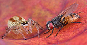 Обои Насекомые Пчелы