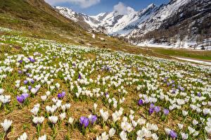 Обои Италия Горы Шафран Lombardia Природа