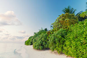 Картинки Мальдивы Тропики Побережье Кусты Thoddoo