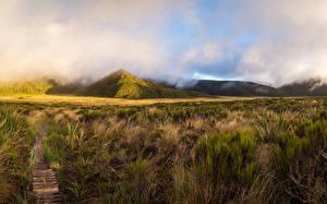 Обои Новая Зеландия Горы Трава Тропы Mount Egmont Taranaki Природа