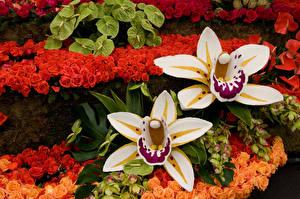 Картинки Орхидеи Вблизи
