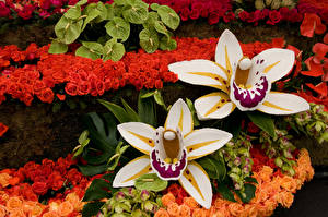 Картинки Орхидеи Вблизи Цветы