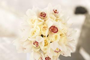 Картинки Орхидеи Розы Букеты Цветы