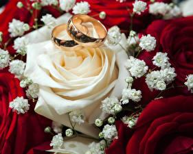 Фотография Роза Вблизи Кольца Две цветок
