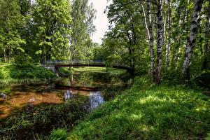 Картинки Россия Санкт-Петербург Парки Пруд Мосты Деревья Березы Nevsky Forest Park Природа
