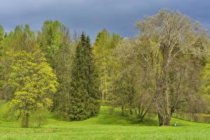 Обои Россия Санкт-Петербург Парки Весенние Деревья Трава Pavlovsk Природа