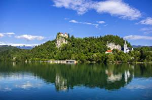 Фотография Словения Озеро Замки Пристань Леса Утес Bled Природа
