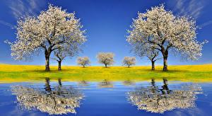 Фото Весенние Цветущие деревья Речка Отражение Природа
