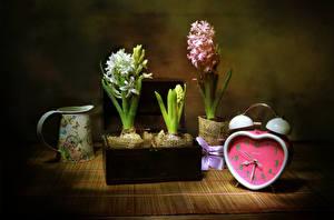 Картинки Натюрморт Гиацинты Часы Будильник Чашка Цветы