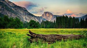 Обои Швейцария Горы Леса Альпы Ствол дерева Трава Природа