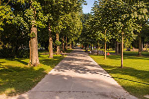 Фотография Швейцария Парки Деревья Аллея Kannenfeldpark