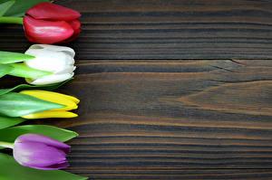 Картинки Тюльпаны Вблизи Доски Разноцветные Цветы