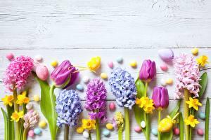 Картинки Тюльпаны Гиацинты Цветы