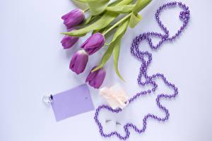 Обои Тюльпаны Украшения Цветной фон Шаблон поздравительной открытки Подарки Кольца Фиолетовых цветок
