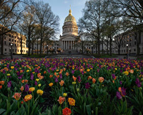 Фотография Штаты Здания Тюльпаны Дворец Уличные фонари Virginia Capitol
