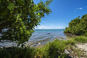 Фотографии Штаты Парки Побережье Флорида Трава Кусты Everglades Природа