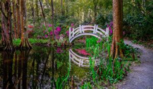 Фотографии Штаты Парки Пруд Мосты Магнолия Деревьев South Carolina Magnolia park Природа