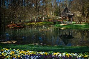 Фотографии Штаты Парки Пруд Анютины глазки Весна Gibbs Gardens Georgia Природа