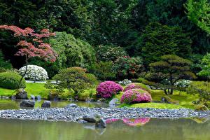 Картинки Штаты Сиэтл Парки Пруд Камни Дизайн Кусты Seattle Japanese Garden Природа