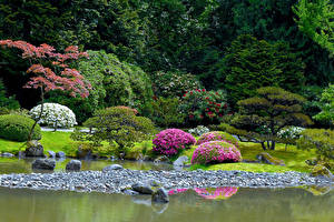 Картинки Америка Сиэтл Парк Пруд Камни Дизайн Кустов Seattle Japanese Garden Природа