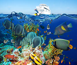 Обои Подводный мир Рыбы Кораллы Яхта Животные