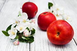 Обои Яблоки Цветущие деревья Доски Ветвь Еда