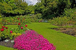 Обои Канада Сады Розы Гвоздики Ванкувер Газон Кусты Queen Elizabeth Garden Природа