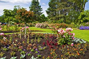 Картинки Канада Сады Розы Ванкувер Кусты Queen Elizabeth Garden Природа